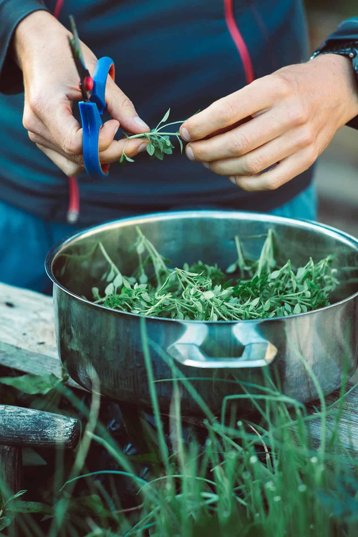 vegan grocery list herbs